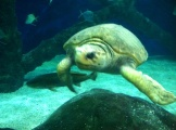 Gotta love the turtles at the Virginia Aquarium and Marine Science Center.