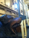 Photos of sea dogs are on display in the Lightship Chesapeake.