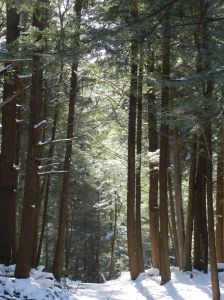 Swallow Falls State Park has the last stand of virgin hemlocks and pines in the state.