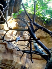The birds at the National Aquarium in Baltimore are one of my favorite reasons for visiting.