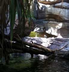 Water, water everywhere in the aquarium's Rain Forest, home to fish, turtles, and all kinds of  birds.