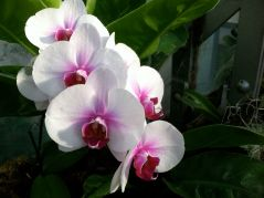Who can resist an orchid? The Botanic Garden has a delightful display.