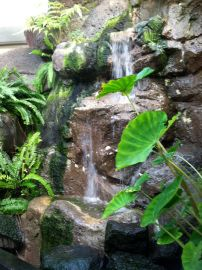 A waterfall cascades over the rocks in the Hawaii garden.