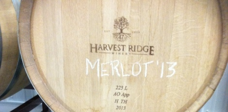 The 2013 harvest of Harvest Ridge Merlot is stored in new American oak barrels.