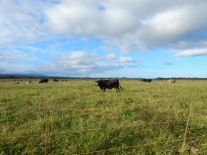 The tour gets started on the flattest part of the 3,000-acre cattle ranch.