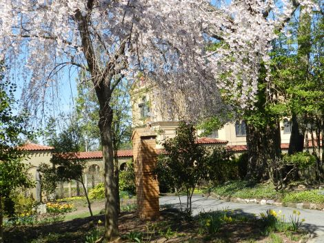 Beside the Memorial Church of the Holy Sepulchre at the Franciscan Monastery, the garden is home to the Stations of the Cross tucked among the many flowers and trees.