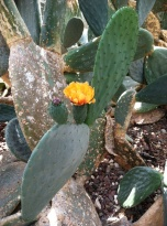 What a contrast: prickly cactus, delicate flower.