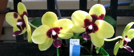 Orchids are always on display in Baltimore's Howard P. Rawlings Conservatory.