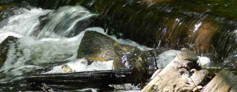 Near the trail to Cunningham Falls, a babbling brook — popular with fly fishermen — breaks the silence of shady glen. Catch and release only is allowed here.