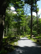 Sunlight filters through the trees along parts of the path.