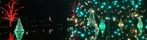 Christmas trees float across a Longwood pond.