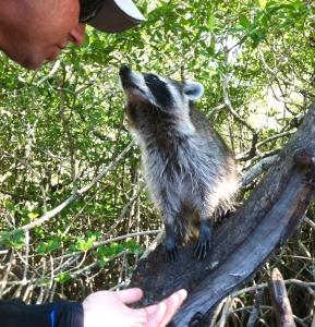 A raccoon and our driver, Justin, share a moment.