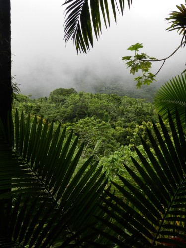 A cloud descends on a mountain peak in El Yunque, Puerto Rico's legendary rain forest.