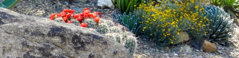 The Desert Botanical Garden shows off its best colors in spring.