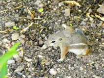 Lots of critters make the garden their home. Besides this little chipmunk, we saw quail, hummingbirds and a roadrunner, a jackrabbit, lizards and lots of bugs.