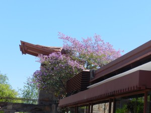 Stop at Taliesin in the springtime and see the orchid tree in bloom over the drafting studio (which is not part of the tour.)