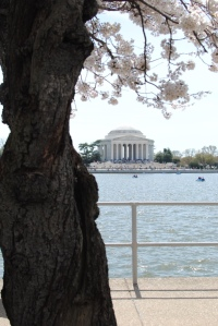 Its gnarled trunk lets visitors know they are looking at one of the  original 1912 trees.