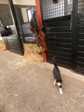 Six cats also live in the stables. Apparently, they and the horses are friends.