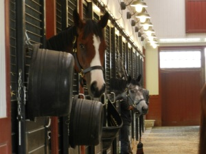 At Preakness time, most of the Sagamore Farm's horses were at Pimlico. Those needing rehabilitation and the younger horses stayed behind in the stables.