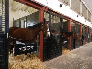Morning in the racing stables at Sagamore Farms.