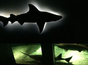 The sharks swim in a ring tank under a display of lit shark cutouts.