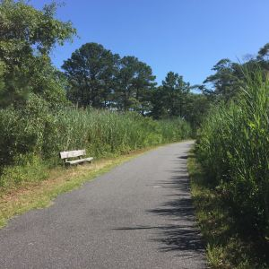 It's not a long trail but there are plenty of places to stop and enjoy the sights and sounds of Assateague.