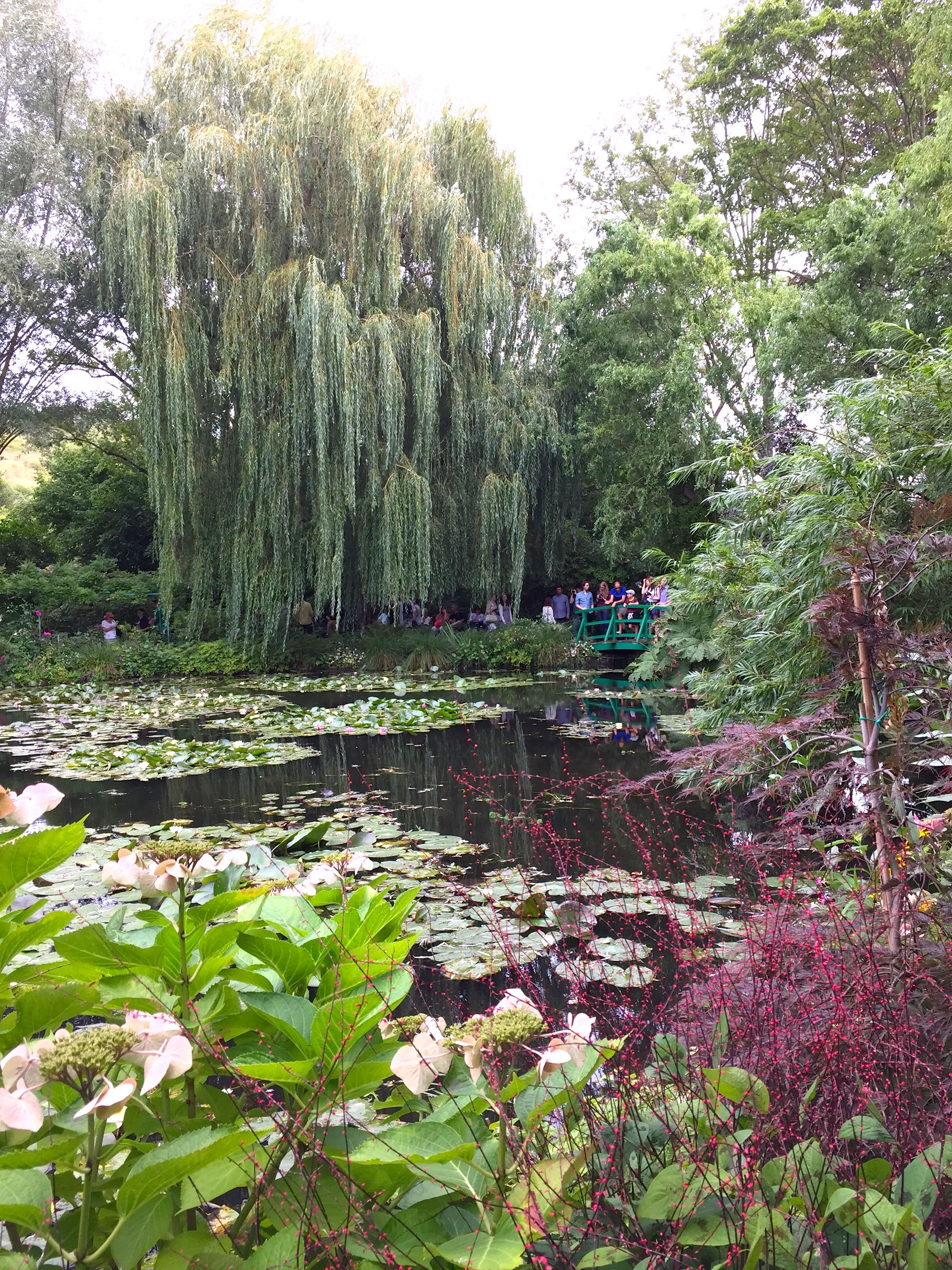 A Willow Tree Made Famous By Claude Monet Stands Tall Over The Water Lily  Ponds.