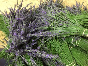 Bouquets of lavender cut and ready to be hung for drying