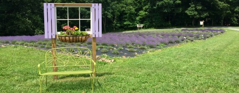 Have your picture taken in front of the picture window for a sweet memory of Deep Creek Lavender Farm.