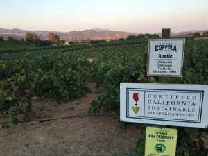 As the sun began to set, we visited Coppola's vineyards.